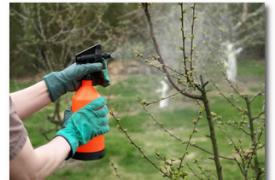 Обязательная осенняя обработка сада от болезней и вредителей
