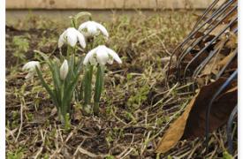 Важные работы в саду и огороде в апреле