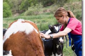 Распространенные заболевания коров и способы их лечения